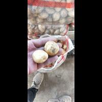 鸡蛋大小土豆