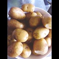 哪里有薯仔