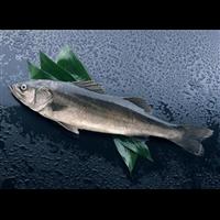 阜阳白鲢鱼苗多少钱一斤