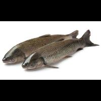 河南草鱼苗多少钱一斤