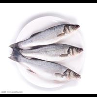 郑州青鱼种苗|郑州青鱼种苗批发价格