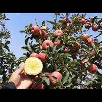 昭通苹果电话