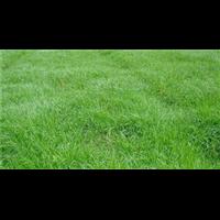 草场|怀化草场