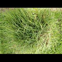 郴州绿化草皮_绿化草皮基地