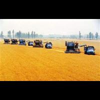 唐山小麦收购|滦南县高学艳粮食收购中心
