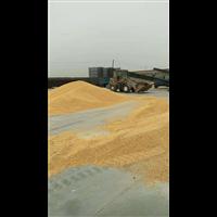唐山玉米收购|滦南县高学艳粮食收购处