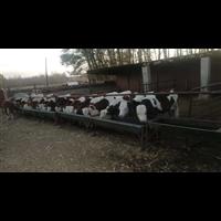 鑫盛奶牛养殖专业合作社丨牛