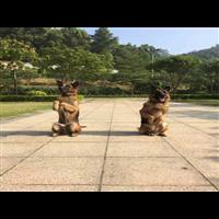 虎门镇宠物培训服务好宠物培训咨询