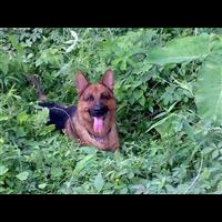 麻涌宠物培训多少钱宠物培训效果怎么样