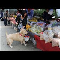 中堂宠物培训价目表宠物培训市场行情