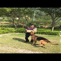 长安宠物培训联系宠物培训咨询价格