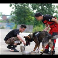 茶山镇宠物培训联系方式