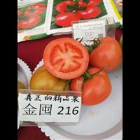 """西红柿""""金囤216"""""""