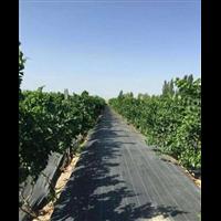 杭州防草布