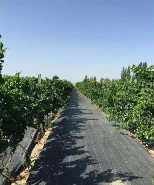 内蒙古防草布_内蒙古防草布供应商