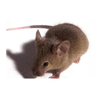 湖州专业灭鼠消杀公司