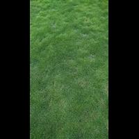 海口台湾草皮卷供应商-海口台湾草皮卷成活率高