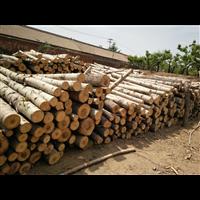 唐山木材生产|遵化市建明镇国宇木材经销处