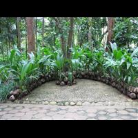 定安椰子树基地-昌江椰子树哪家好