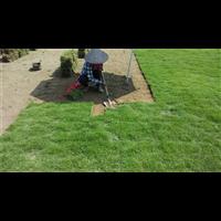 洛阳马尼拉草坪