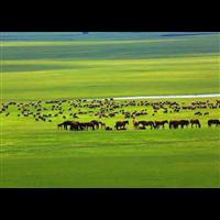 内蒙古呼和浩特沙漠草原包车