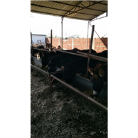 唐山畜禽养殖销售