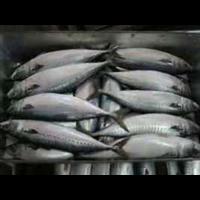冻鱼--泉州冻神情显品配送有限公司
