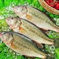 鲈鱼-泉州晋江●生鲜配送公司产品新鲜上门提供