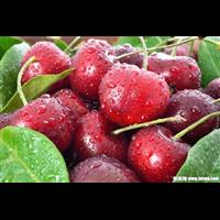 樱桃-晋江东石蔬菜水果配送公司基吃饭地采摘直接提供