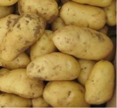 土豆-泉州蔬菜配送公�司,�槟�∏提供送�上��T
