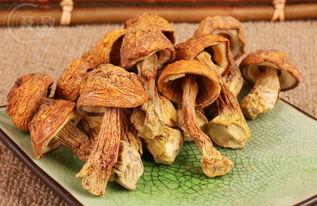 黄菇-晋江干货调料ballbet登陆公司原生态提供