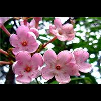重庆室内花卉,重庆花卉交易市场