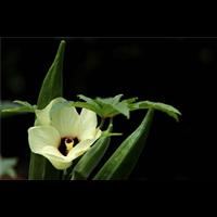 重庆花卉基地,重庆花卉基地
