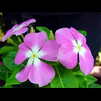 重庆室内花卉,重庆绿植租摆