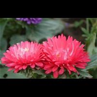 重庆盆栽花卉,花卉市场有哪些