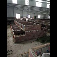 漳州豚鼠养殖