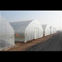 宁夏单拱温室大棚 一亩大棚造价多少钱