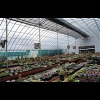 新疆花卉大棚温室