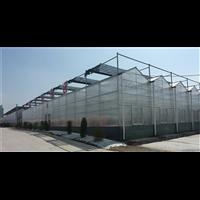 新疆阳光板温室