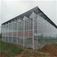 河北智能玻璃温室大棚