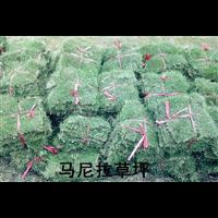 (成都绿化草皮) 成都草皮种植基地