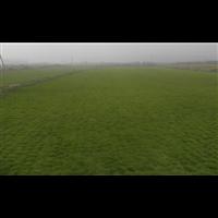 成都草皮基地种植