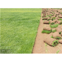 成都草皮基地