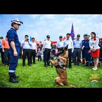 福州宠物犬寄养训练