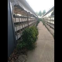 长毛兔养殖基地