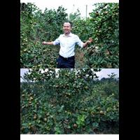 2020湖南三年嫁接油茶苗最新價格