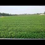 福祥农民专业种植