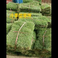 青海冷季型草坪