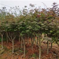 武汉室内外花卉植物养维护苗木补种送货,花园绿化园林设计