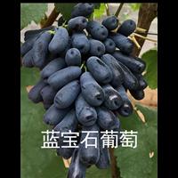 上海葡萄苗栽植流程